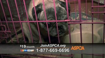 ASPCA TV Spot, 'Make a Difference' Featuring Eric McCormack - Thumbnail 8