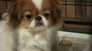 ASPCA TV Spot, 'Make a Difference' Featuring Eric McCormack - Thumbnail 2