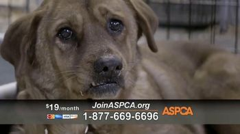 ASPCA TV Spot, 'Make a Difference' Featuring Eric McCormack - Thumbnail 3