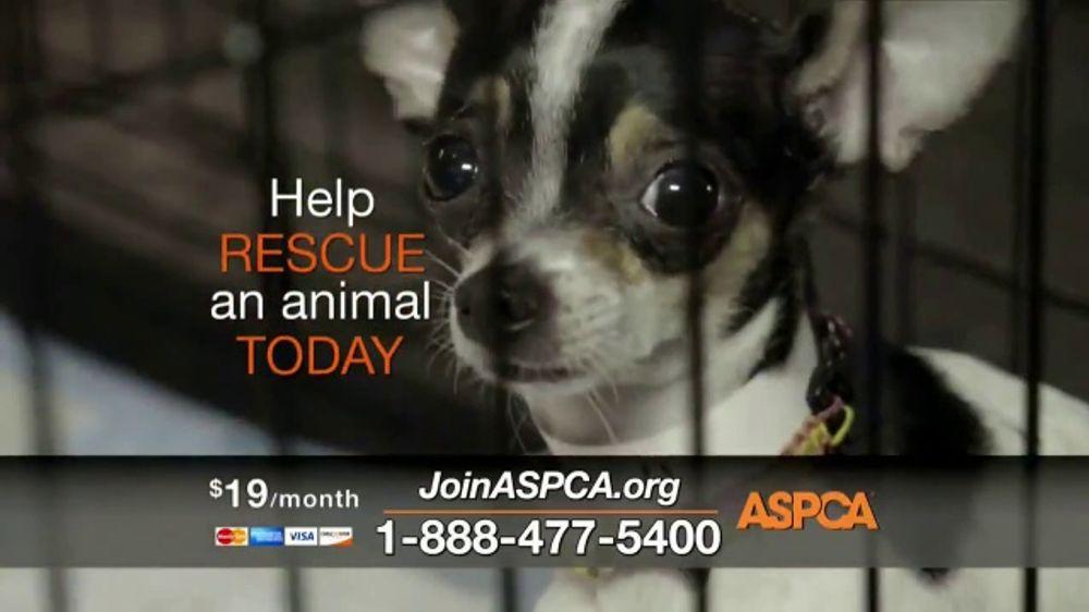 ASPCA TV Commercial, 'Raids'