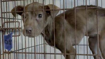 ASPCA TV Spot, 'Raids'