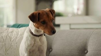 PetComfort Feeding System TV Spot, 'Sneaky Pete' - Thumbnail 4