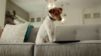PetComfort TV Spot, 'Sneaky Pete'