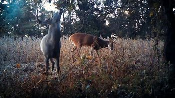 Wildlife Research Center Special Golden Estrus TV Spot, 'White Tails' - Thumbnail 3