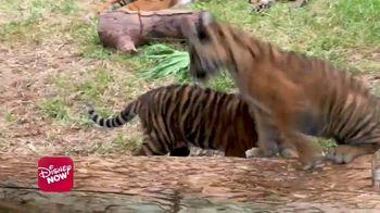 DisneyNOW TV Spot, 'Disney Animal Shorts' - Thumbnail 2