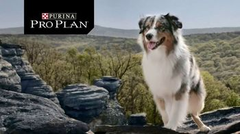 Purina Pro Plan Savor TV Spot, 'Probiotics' - Thumbnail 1