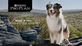Purina Pro Plan Savor TV Spot, 'Probiotics' - Thumbnail 2