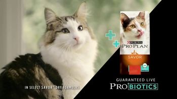 Purina Pro Plan Savor TV Spot, \'Probiotics\'