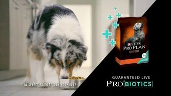 Purina Pro Plan Savor TV Spot, 'Probiotics' - Thumbnail 6