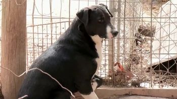 ASPCA TV Spot, 'Winter Help' - Thumbnail 2