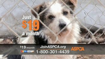 ASPCA TV Spot, 'Winter Help' - Thumbnail 3