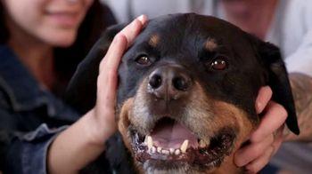Blue Buffalo Foundation TV Spot, 'Pet Cancer Awareness' - Thumbnail 1