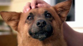Blue Buffalo Foundation TV Spot, 'Pet Cancer Awareness'