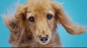BarkBox TV Spot, 'Blow Your Dog Away'