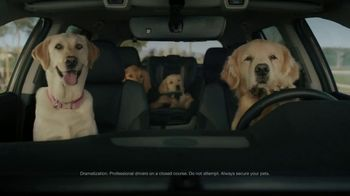 2020 Subaru Outback TV Spot, 'Dog Tested: No Pets Allowed' [T2]