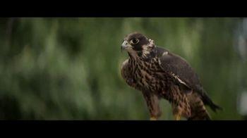 FanDuel Sportsbook TV Spot, 'Payout Falcon'