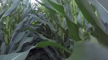 Golden Harvest G03R40 TV Spot, 'Agronomy Spotlight: Broadly Adapted' - Thumbnail 8