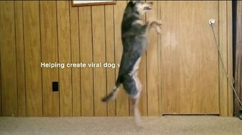 Purina Beggin' TV Spot, 'Bonkers for Beggin: Purple Leash Project' Song by Johnny Wishbone - Thumbnail 5