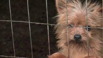 ASPCA TV Spot, 'Rescuer Tim Rickey's Story: Free Membership Kit' - Thumbnail 1
