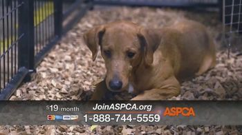 ASPCA TV Spot, 'Rescuer Tim Rickey's Story: Free Membership Kit' - Thumbnail 9