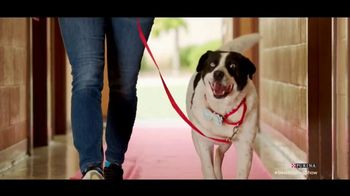 Purina TV Spot, 'Food Donations for Adoptable Dogs From Purina and the BHDS' feat. Maria Menounos - Thumbnail 5