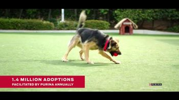 Purina TV Spot, 'Food Donations for Adoptable Dogs From Purina and the BHDS' feat. Maria Menounos - Thumbnail 7