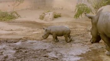 San Diego Zoo TV Spot, 'Edward the Southern White Rhino' - Thumbnail 2