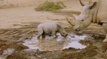 San Diego Zoo TV Spot, 'Edward the Southern White Rhino' - Thumbnail 3
