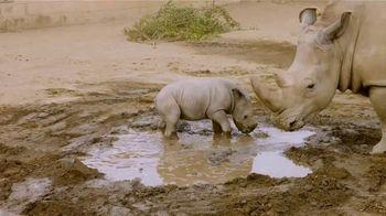 San Diego Zoo TV Spot, 'Edward the Southern White Rhino' - Thumbnail 4