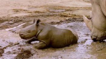 San Diego Zoo TV Spot, 'Edward the Southern White Rhino' - Thumbnail 9