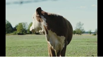 Cattle Curtain TV Spot, 'Long Gone' - Thumbnail 1
