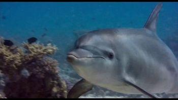 Disney+ TV Spot, 'Dolphin Reef and Elephant' - Thumbnail 2