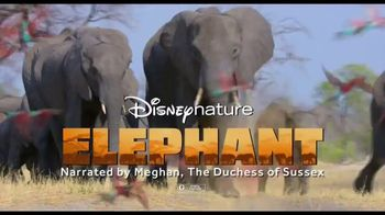 Disney+ TV Spot, 'Dolphin Reef and Elephant'