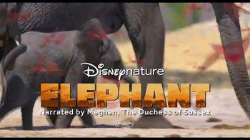Disney+ TV Spot, 'Dolphin Reef and Elephant' - Thumbnail 5