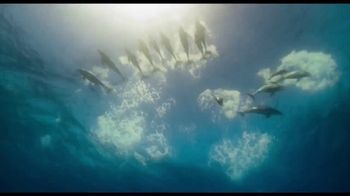 Disney+ TV Spot, 'Dolphin Reef and Elephant' - Thumbnail 6