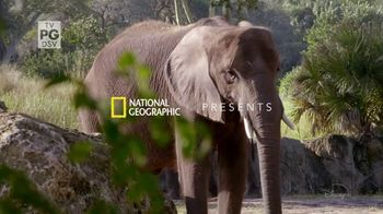 Disney+ TV Spot, 'Magic of Disney's Animal Kingdom'