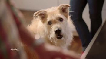 Bravecto TV Spot, 'Protect Your Dog From Fleas & Ticks' - Thumbnail 2