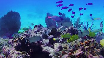 The Florida Keys & Key West TV Spot, 'Fortunate' - Thumbnail 6