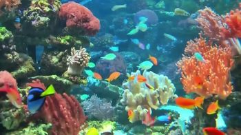 Animal Behavior College TV Spot, 'Aquarium Maintenance Career' - Thumbnail 10