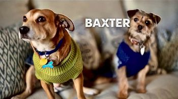 Zaxby's Zensation Zalad and Fillet Sandwich Meal TV Spot, 'Baxter and Back' - Thumbnail 1
