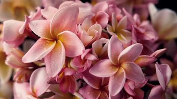 Glade Tropical Blossoms TV Spot, 'Ignite Your Mood' - Thumbnail 3