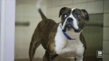 Hill's Pet Nutrition Science Diet TV Spot, 'Desocupar los albergues: segundas oportunidades' [Spanish]