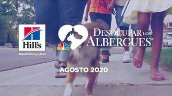 Hill's Pet Nutrition Science Diet TV Spot, 'Desocupar los albergues: segundas oportunidades' [Spanish] - Thumbnail 10