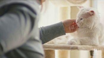 Hill's Pet Nutrition Science Diet TV Spot, 'Desocupar los albergues: segundas oportunidades' [Spanish] - Thumbnail 5