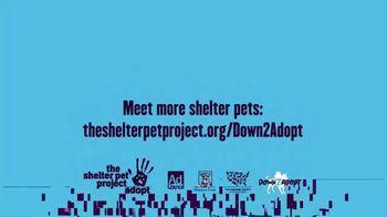 The Shelter Pet Project TV Spot, 'Meet Molly' - Thumbnail 9