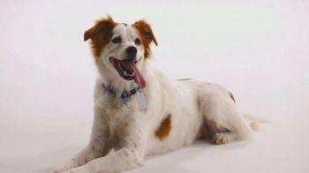 The Shelter Pet Project TV Spot, 'Meet Molly'