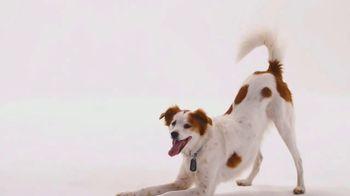 The Shelter Pet Project TV Spot, 'Meet Molly' - Thumbnail 7
