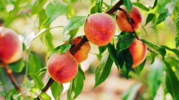 Sprouts Farmers Market TV Spot, 'Summer Fruits' - Thumbnail 3