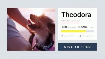 Cuddly TV Spot, 'Theodora the Yorkie' - Thumbnail 7