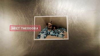 Cuddly TV Spot, 'Theodora the Yorkie' - Thumbnail 1